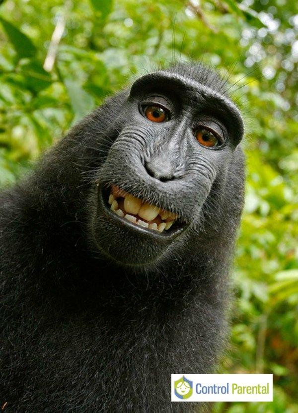 Los selfies en exceso se relacionan con problemas psicológicos