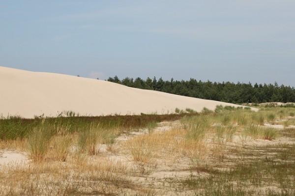 dune-325222_640